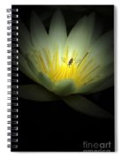 Lotus Blossom And Bee Spiral Notebook