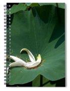 Lotus Leaf--castoff IIi Dl060 Spiral Notebook
