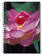 Lotus--secrets Within 24k Spiral Notebook