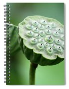 Lotus Seed Pods Spiral Notebook