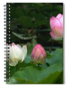 Lotus--stages Of Life II Dl024 Spiral Notebook