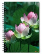 Lotus--stepping Stones 24p Spiral Notebook