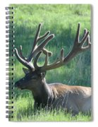 Lounging Elk Spiral Notebook