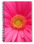 Love Daisy Spiral Notebook