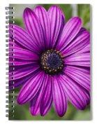 Lovely African Daisy - Osteospermum Spiral Notebook