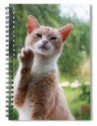 Lovely Cat Spiral Notebook