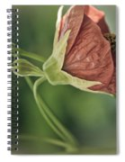 Lovely Lady Spiral Notebook