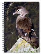 Lovely To Look At Spiral Notebook