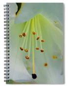 Luminous White Tiger Lily Spiral Notebook