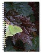 Luna Moth 1 Spiral Notebook