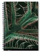 Luna Moth Antennae, Sem Spiral Notebook