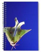 Luna Moth In Flight Spiral Notebook