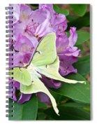 Luna Moth On Rhododendron 1 Spiral Notebook