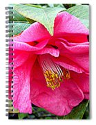 Luscious Pink Hdr Spiral Notebook