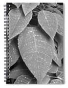 Lush Leaves And Water Drops 2 Bw Spiral Notebook