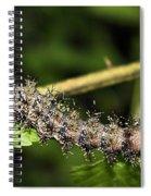 Lymantria Dispar Gypsy Moth Larva Spiral Notebook
