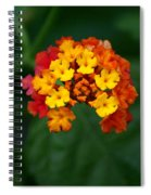 Macro Joy Spiral Notebook