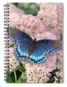 Madam Blue Spiral Notebook