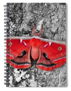 Madam Moth - Red White And Black Spiral Notebook