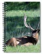 Magnificent Spiral Notebook