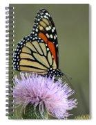 Magnificient Monarch Spiral Notebook