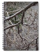 Magnolia Tree Branches Covered With Ice No.3834 Spiral Notebook