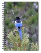 Magpie In Snow Spiral Notebook