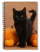 Maine Coon Kitten And Pumpkins Spiral Notebook