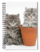 Maine Coon Kitttens Spiral Notebook