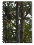 Majestic Bald Eagle Spiral Notebook