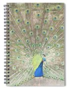 Majestic Peacock Spiral Notebook