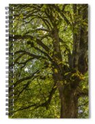 Majestic Tree Spiral Notebook