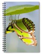 Malachite Butterfly On Leaf Spiral Notebook