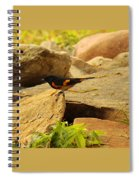 Male American Redstart On The Rocks Spiral Notebook