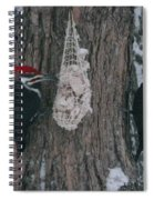 Male And Female Pileated Woodpeckers Spiral Notebook