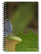 Male Eastern Tailed Blue Butterfly 3063 Spiral Notebook