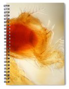 Male Fruit Fly Spiral Notebook