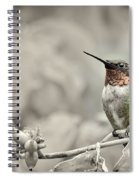 Male Ruby Throated Hummingbird Spiral Notebook
