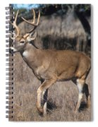 Male White-tailed Deer Spiral Notebook