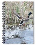 Mallard Duck Flying Spiral Notebook
