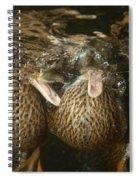 Mallard Ducks Underwater Spiral Notebook