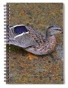 Mallard Hen Arabesque Spiral Notebook