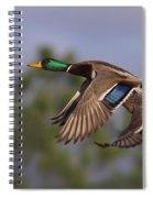 Mallard Perfection Spiral Notebook
