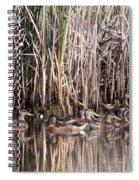 Mallard Reunion Spiral Notebook
