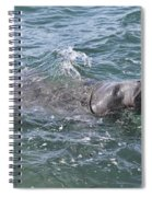 Manatee At Ponce Inlet Spiral Notebook