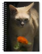 Many Moods Of Kitty Spiral Notebook