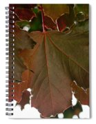 Maple 2 Spiral Notebook