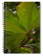 Maple 3 Spiral Notebook