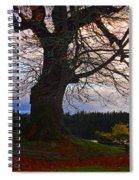Maple Evening Spiral Notebook