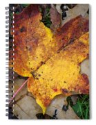Maple Leaf In Fall Spiral Notebook